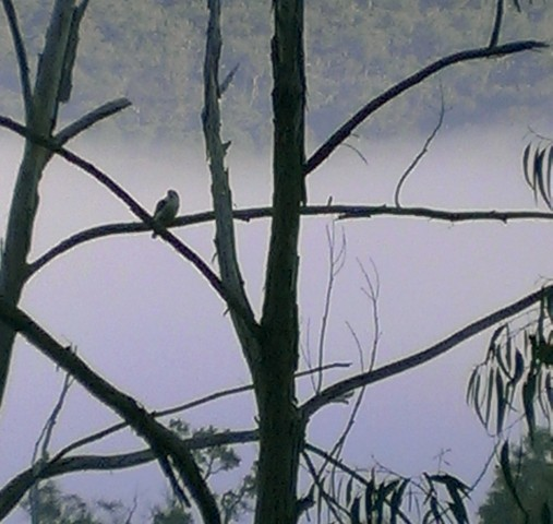 Morning bird in mist